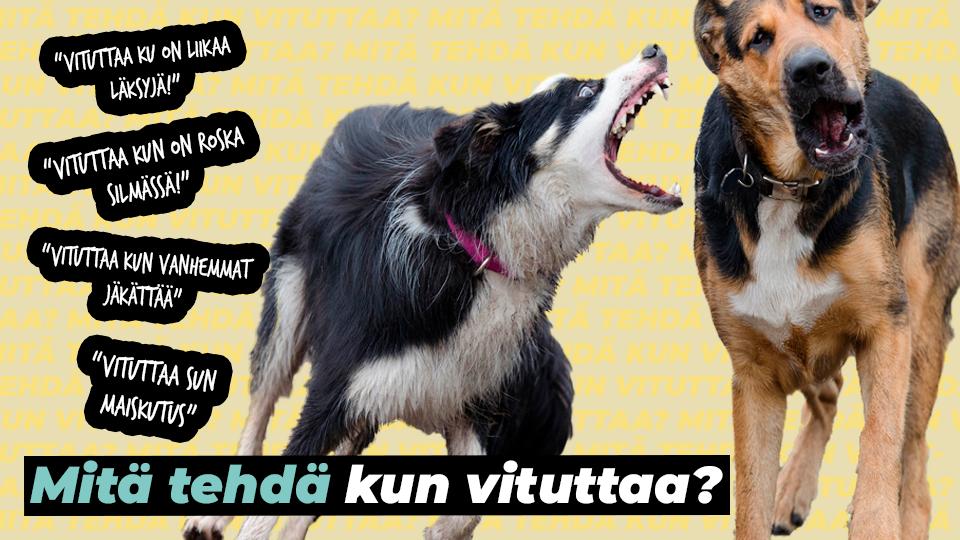 Haukkuva ja miettivä koira sekä teksti, mitä tehdä kun vituttaa