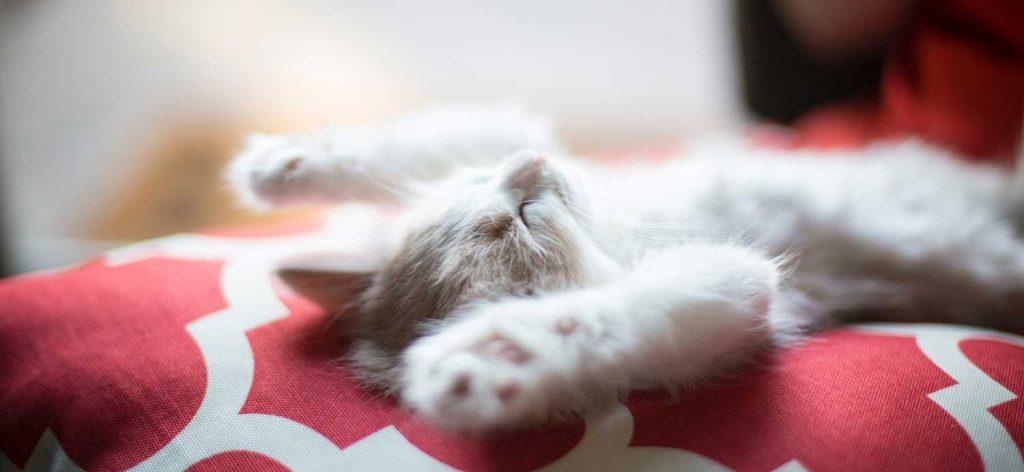 Vaalea kissa makoilee selällään käpälät pystyssä punakuvioisella sohvalla.